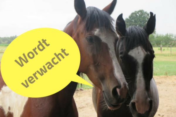 Verbeter de relatie met je paard